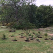 rolston-park-community-day-pic-3