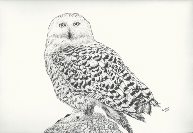 White snowy Owl pen 3